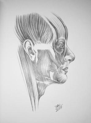 face of human