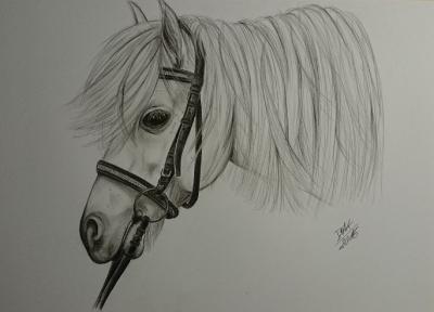 theresas pferd